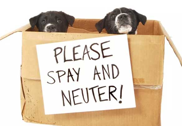 Decision to spay and neuter your dog | Smilin' Dog Bakery, LLC.